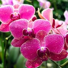 hochzeitsblumen_orchideen