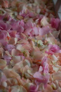 Bilder von Frau Meister-Hochzeit 031-1000